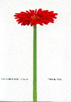 Gerbera Thank You